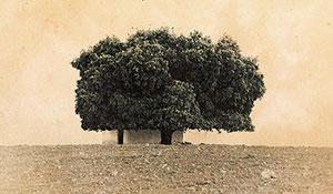 Mi casa, mi árbol